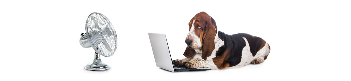 Dog at computer choosing web site package