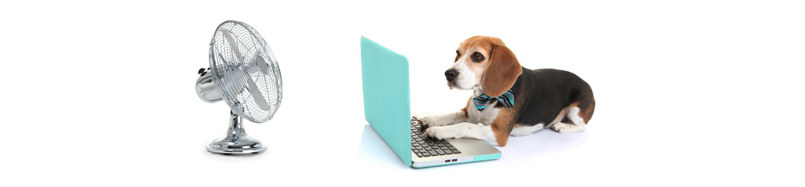Breeze Website Design York - Dog with Computer and Fan